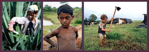 child labor in agriculture essay